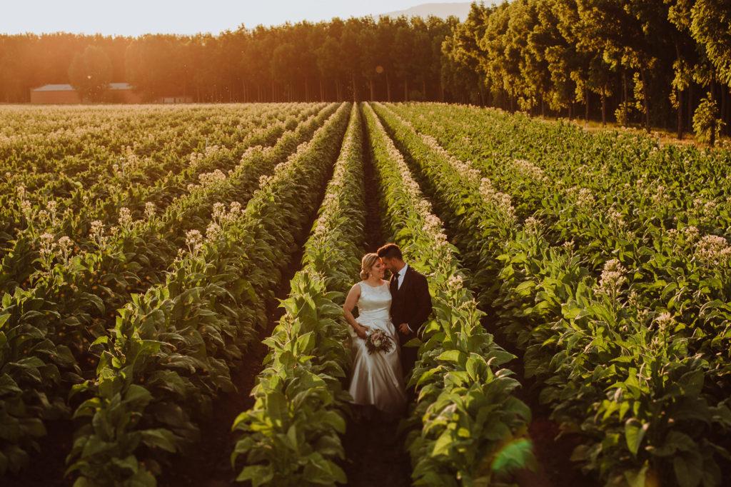 Reportaje de boda en los campos de Extremadura de tabaco