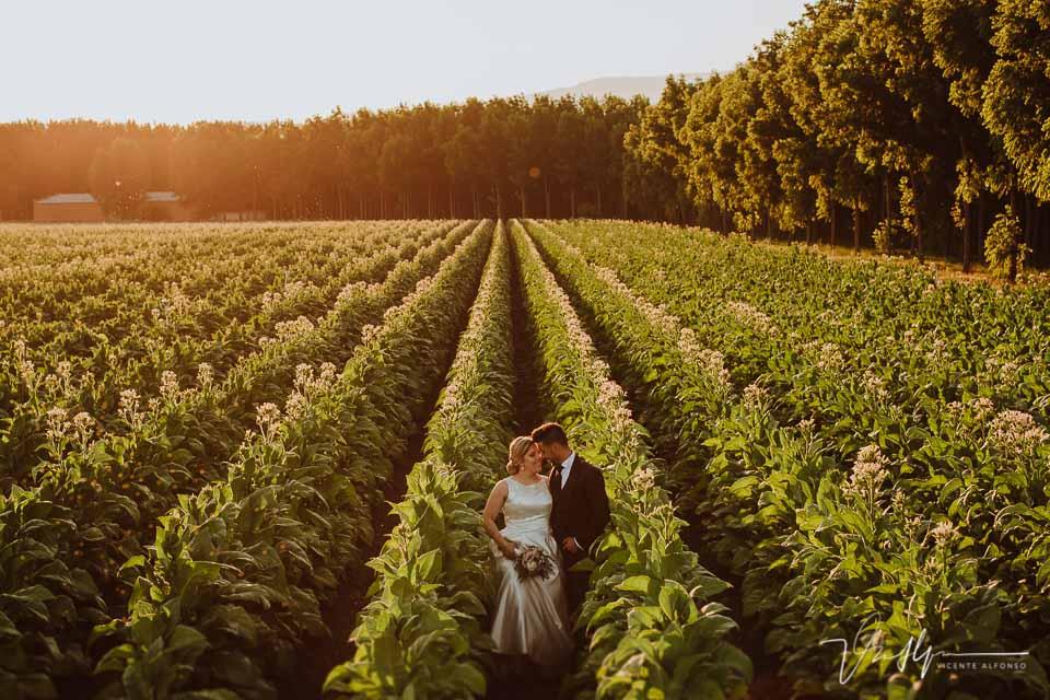 Reportaje de boda entre tabaco en la Vera