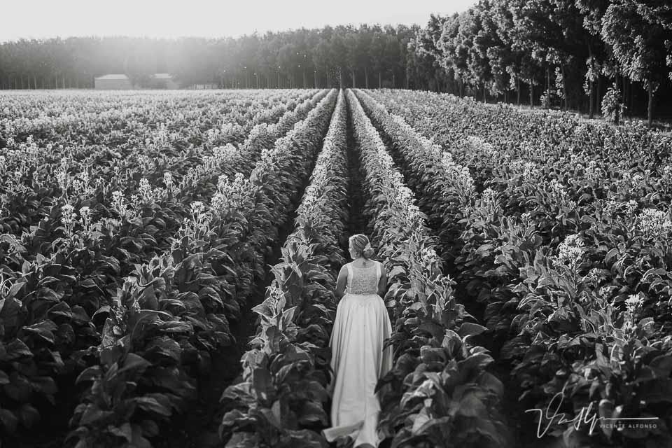 Detalle trasero del vestido de novia entre plantaciones de tabaco