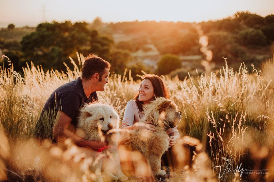 Atardecer en el campo con dos perros chowchow