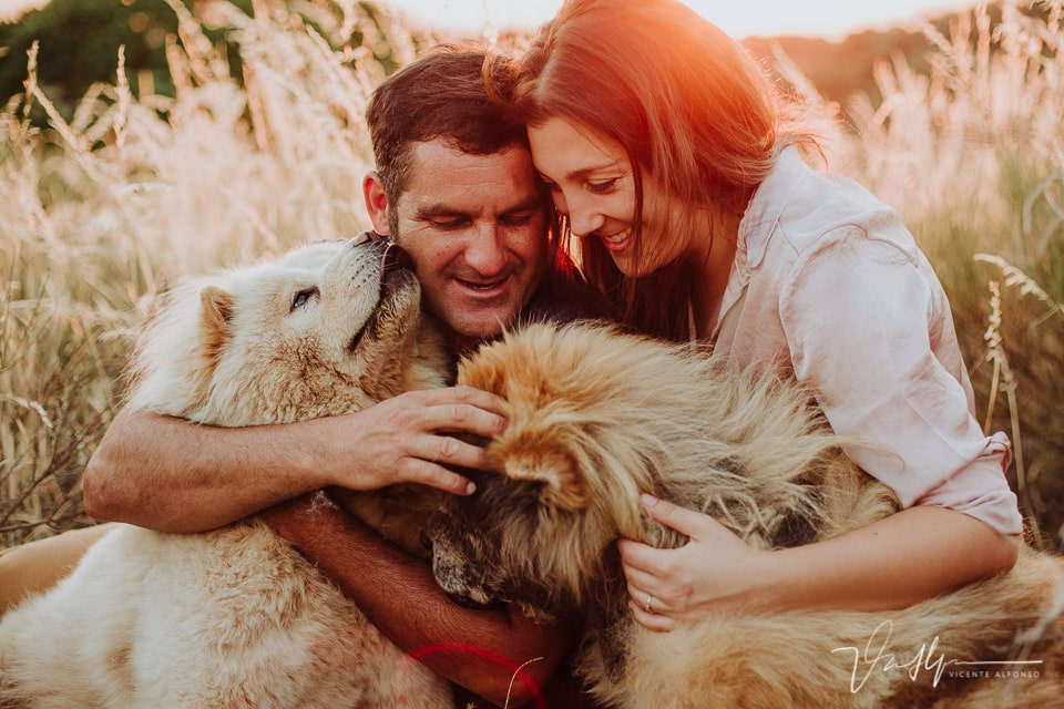 Pareja abrazando sus perros Chowchow