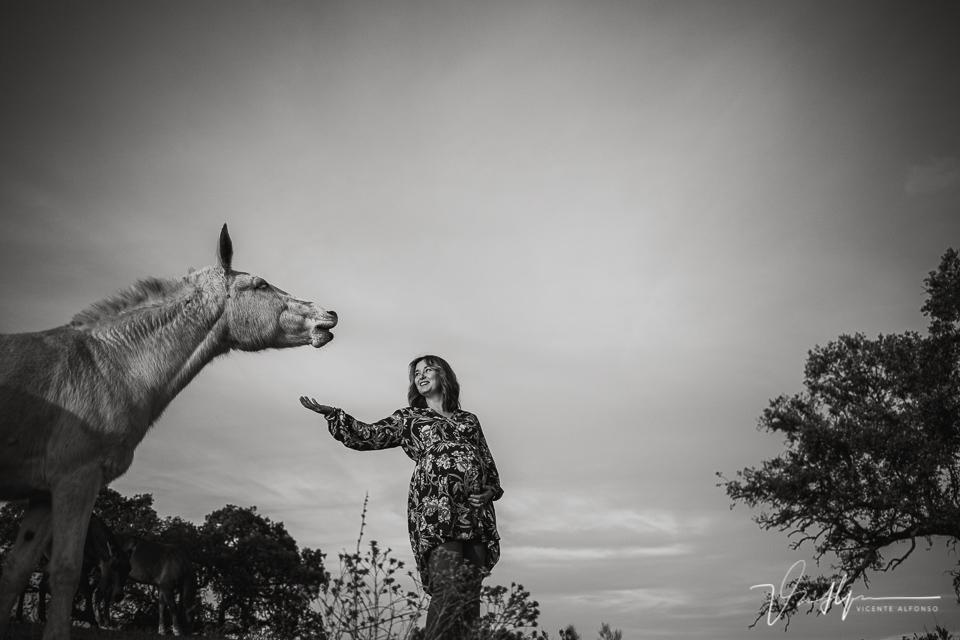 Reportajes de embarazo entre caballos en exteriores